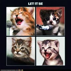 Cat Beatles?!