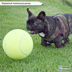 Огромный теннисный мячик  http://ali.pub/166q8a…