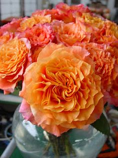 Orange Garden Rose romantic antike garden roses - these are amazinga perfect year