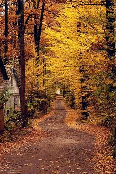 Country road covered with beautiful fall foliage. Autumn Nature, All Nature, Autumn Leaves, Autumn Forest, Autumn Rain, Late Autumn, Golden Leaves, Forest Scenery, Forest Landscape
