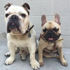 Just Huxley and Roseberry chillin' by a grey wall. No frills ❤️ #roadogs