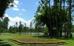 São Paulo - Parque do Carmo.A área do Parque do Carmo é superior a 15 milhões de m². O parque foi originalmente uma antiga fazenda do século XIX. O bosque tem aproximadamente 6 mil árvores,