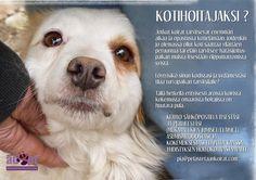 Kotihoitaja3 Dogs, Animals, Animales, Animaux, Animal Memes, Animal, Pet Dogs, Dog, Animais