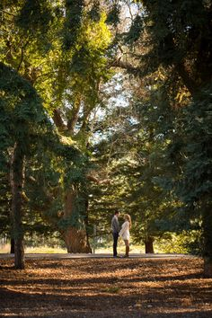 Engagement shoot in the Napa Valley!