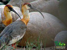 Universo animal: Conservación de aves.