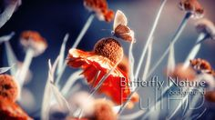 tylised video collection with vignetting of a flower in garden with butterfly and with indigo background. Shallow Depth of Field.