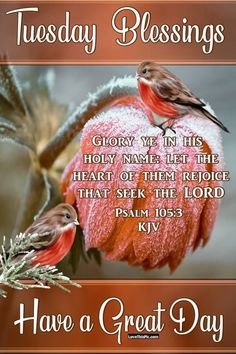 Glory In His Holy Name. Psalms, Tuesday Quotes Good Morning, Tuesday Greetings, Tuesday Images, Tuesday Inspiration, Days Of Week, Seek The Lord