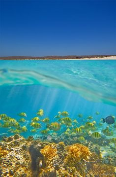 Dive the Ningaloo Reef in Western Australia... If I saw a whale shark, it would be awesome, but I'd probably be scared crazy.