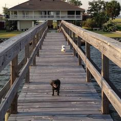 Lila and Gracie headed to the end of the pier to watch the sunset!!!