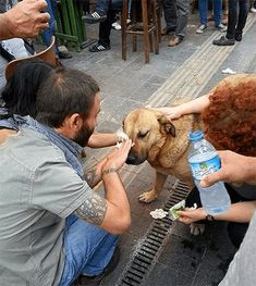 22.) Protestors in Turkey help a dog affected by tear gas.