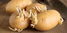 Keimende Kartoffeln sind lästig und unappetitlich. Zum Glück könnt ihr das Problem ganz leicht lösen, wenn ihr diesen Trick kennt!