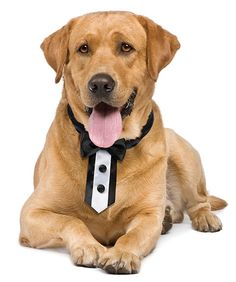$12 AUD would you like your four legged friend to walk down the aisle with you?