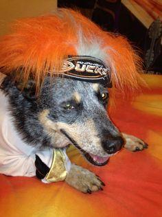 This dog is totally rocking the Ducks Dedication orange hair!