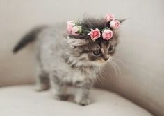 cat cute Cool beautiful hipster vintage flowers pink amazing sweet Daisy roses baby cat sweet animal daisyflower