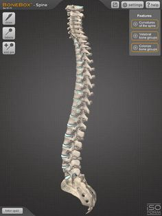 iSO-FORM, LLC | Medical | iPad | BoneBox™ - Spine ... $0.00 | ver.1.0| $1.99 | The BoneBox™ Spine Viewer is a real-time 3D medical education and patient communication tool, featuring a detailed anatomical spine model. It is a ...
