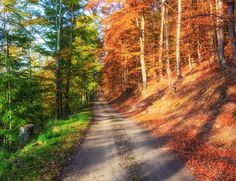 Un bosque de otoño. Cargado al 50%.