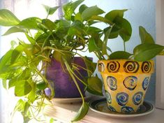 Air purifying indoor plants that are hard to kill! #hardtokillhouseplants #houseplantsairpurifying