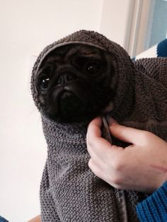 I truly believe they got the idea of the ET character from pugs... just look at that adorable face...
