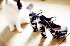 those adorable cat shoes from Miu Miu 2010 spring/summer are still on the top of my list Miu Miu Heels, Cherry Blossom Girl, Cat Shoes, Asos, Knitted Coat, Crazy Cat Lady, Love Fashion, Fashion Shoes, Me Too Shoes