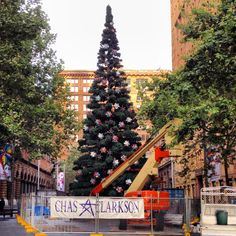 The Christmas tree at Martin Place is taking shape.