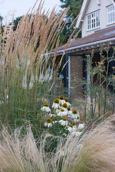combination of Calamagrostis x acutiflora 'Karl Foerster', Echinacea purpurea 'White Swan', Stipa tenuissima (Mexican feather grass), Veronicastrum virginicum 'Album', and common fennel