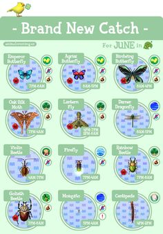We've come full circle, Mayors! It's almost been a year now since ACNL's release and this month marks the last monthly guide on my to-do list! Animal Crossing Fish, Animal Crossing Music, Nintendo Switch Animal Crossing, Animal Crossing Wild World, Animal Crossing Guide, Animal Crossing Qr Codes Clothes, Animal Crossing Villagers, Animal Crossing Pocket Camp, Goliath Beetle