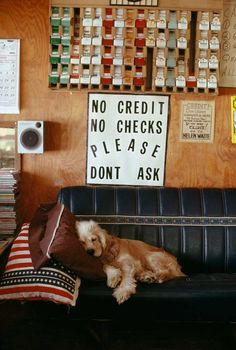 A dog rests on a couch in a store in Texas, 1992