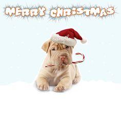 Christmas Card Pack Cute Puppys by Cutecardsforu on Etsy, £3.00