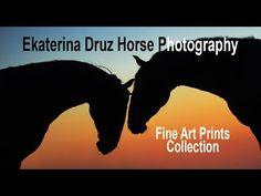 Gorgeous Horses by Katya Druz. Horse Photography, Video Photography, Fine Art Photography, Home Art, Fine Art Prints, Rainbow, Horses, Videos, Collection