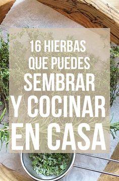 16 Plantas para sembrar y cocinar en casa Más Eco Garden, Green Garden, Edible Garden, Garden Plants, Water Garden, Organic Gardening, Gardening Tips, Indoor Gardening, Fruit Plants