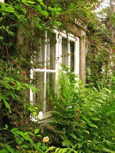 kendrasmiles4u:  The Cottage Garden on We Heart Ithttp://weheartit.com/entry/117317591/via/kendra_day_crockett