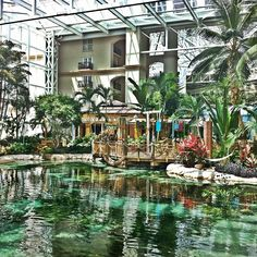 Inside the Gaylord Palms hotel!