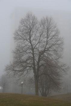 Foggy winter tree