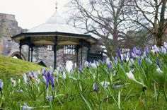 The bandstand in the backgound of crocus blooms Newark On Trent, Gazebo, Bloom, Outdoor Structures, Kiosk, Pavilion, Cabana