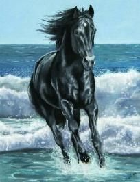 """Black Stallion By The Sea Queen Size Blanket 95"""" x 79"""""""