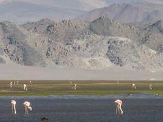 Laguna Blanca. Catamarca Provincia de Argentina. www.perfectargentina.com