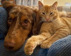 From dogs to cats, hamsters and guinea pigs, fish and herptiles, we love our pets. In Canada alone, there are 78 million households with pets - that's more than half of the population.