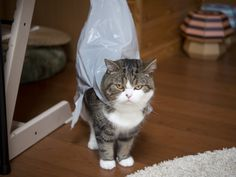 maru. Because I heard a rustling sound, I looked for the figure of the sound. 10/29, 5-1 私信