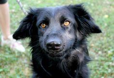 Golden eyes / Occhi d'oro.... Bambi! Cerca casa: info@leudica.org / adozioni@leudica.org ADOPTED!! :)