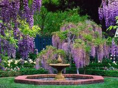 BEAUTY! Wisteria and a fountain to finish it off!