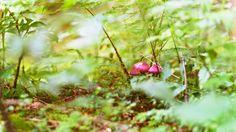 Pilzzeit II by Florian Redlinghaus on Tree Mushrooms, Stuffed Mushrooms, Trees, Vegetables, Photography, Food, Stuff Mushrooms, Photograph, Tree Structure