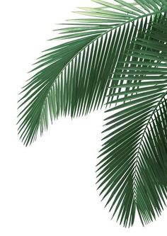 'Tropical Palm Leaves' Poster by Freetime Activities, Plant Wallpaper, Nature Wallpaper, Trendy Wallpaper, Fabric Wallpaper, Pattern Wallpaper, Affinity Photo, Leaf Template, Tropical Leaves