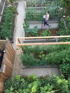 garden in early summer My design of our urban farm incorporates lots of vertical growing and trellis systems in order to grow vegetables on our small space homestead. This section of raised beds in our vegetable garden has pathways of decomposed granite.
