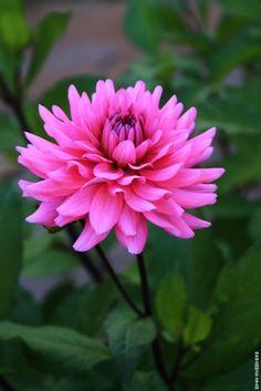 Flower 30 by Mohammad Azam