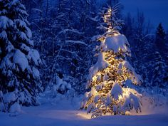 80 Winter Christmas Wallpapers Wallpapers available. Share Winter Christmas Wallpapers with your friends. Submit more Winter Christmas Wallpapers Christmas Tree Wallpaper, Christmas Desktop, Blue Christmas, Outdoor Christmas, Winter Christmas, Christmas Lights, Christmas Time, Merry Christmas, Christmas Landscape