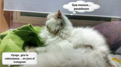 que nooo... #funny #cute #estamostanagustito