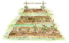 ELAYNE SEARS  Simple, low-cost framing can be made for your permanent vegetable beds using logs or recycled cedar fence rails. Leaving the ends open makes it easier to use a tiller to prepare seed beds.    Read more: http://www.motherearthnews.com/multimedia/image-gallery.aspx?id=2147498850=1#ixzz26w0Ztt00