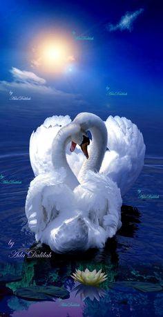 Good morning, have a wonderful day my friend! Swan Love, Beautiful Swan, Beautiful Birds, Love Images, Beautiful Images, Good Morning My Love, All Birds, Pretty Birds, Colorful Birds