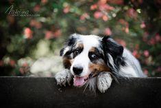 Charlie Dog Photography, Dogs, Animals, Animales, Animaux, Pet Dogs, Doggies, Animal, Animais