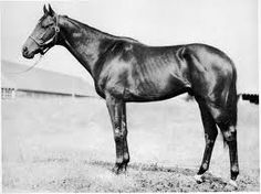 Ponder (1946-1958) American Thoroughbred racehorse, was the son of the 1944 Kentucky Derby winner, Pensive and sire of the winner of the 1956 Kentucky Derby, Needles. Ponder, himself, won the Derby in 1949. Pensive, Ponder, and Needles are the second family of grandfather, father, and son to win the Kentucky Derby (the first were Reigh Count in 1928, 1943 Triple Crown winner Count Fleet, and Count Turf in 1951). A Calumet Farm foal, trained by the Hall of Fame conditioner Ben Jones